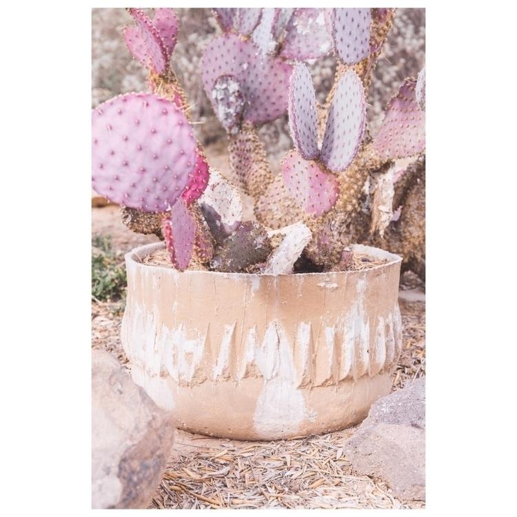 Pink lemonade cactus - photography - nicoleabulka | ello