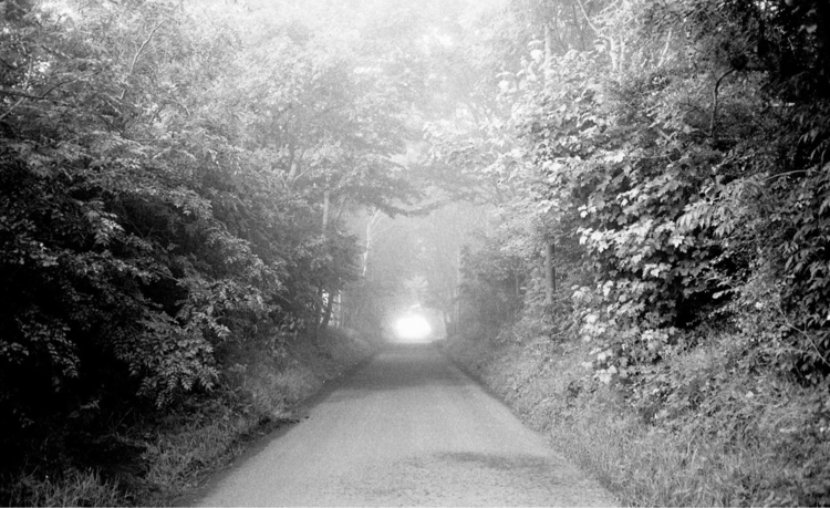 Summer fog - photography, filmphotography - jmo | ello