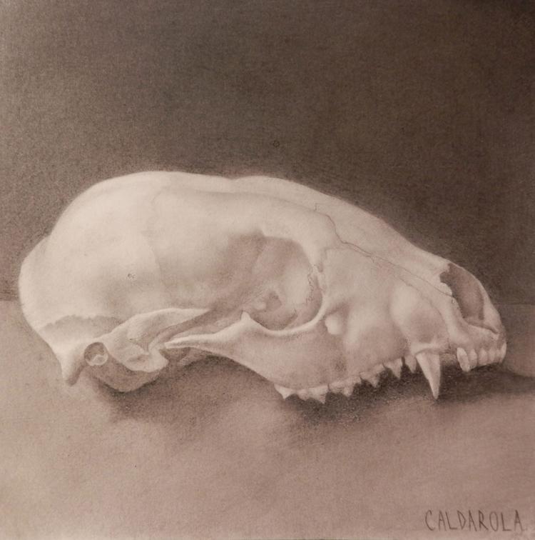 Raccoon Skull Broken Zygomatic  - laurencaldarola | ello