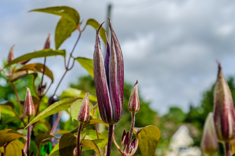 Reaching Sky - macro, d5100, outdoors - marcuswilsonculley | ello