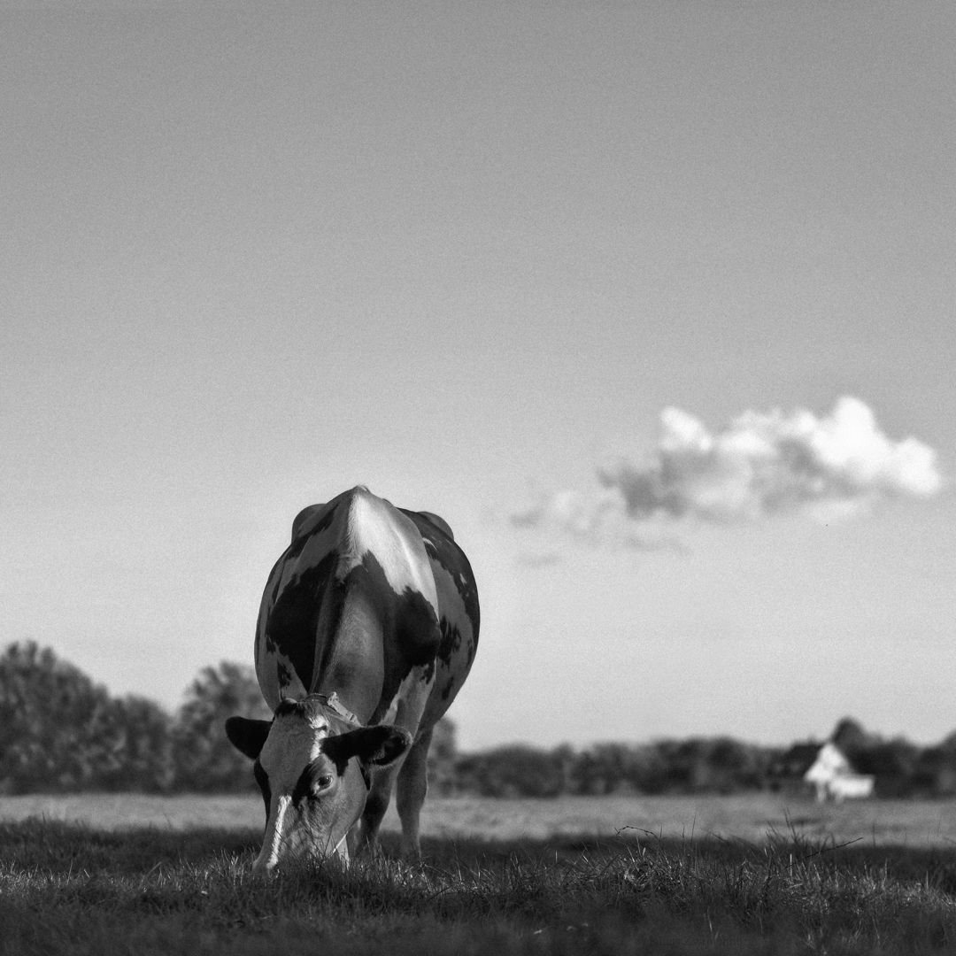 September - animals, blackandwhite - klaasphoto | ello