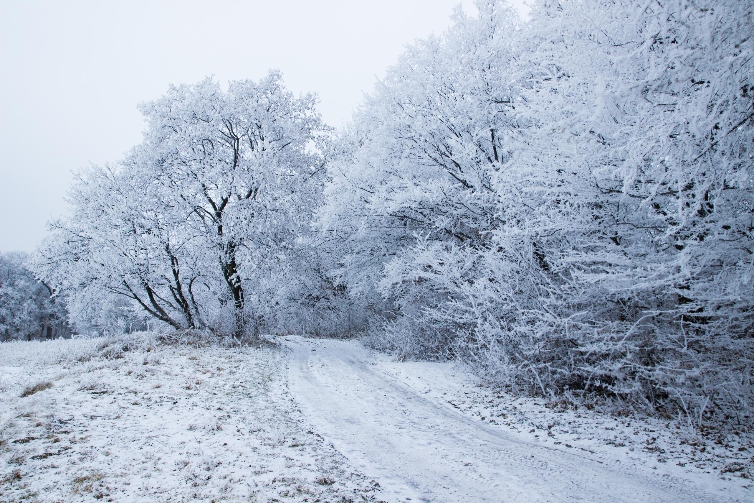 Snow Fairy passed today Hoia fo - panioan   ello