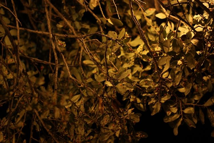 El árbol de las bolitas - tree  - juliastm | ello