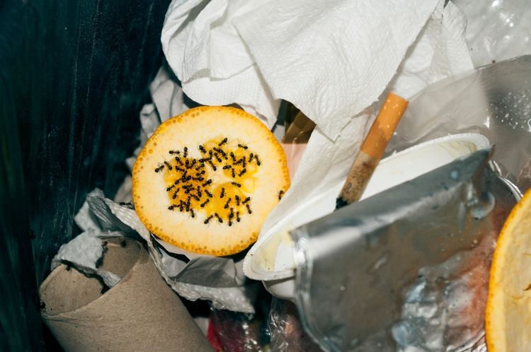 ant war - photo, pentax, lemon, trash - popsick | ello
