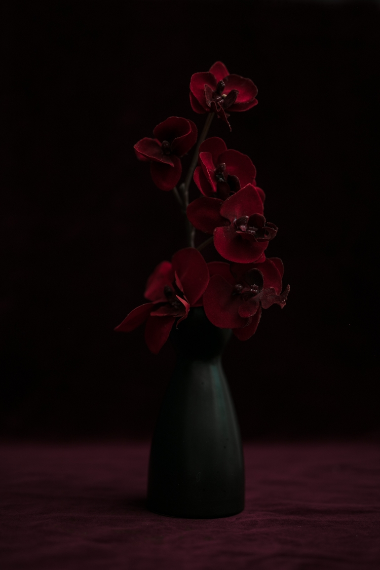 Artificial beauty - stillLife, fineartphotography - ilvaberetta | ello