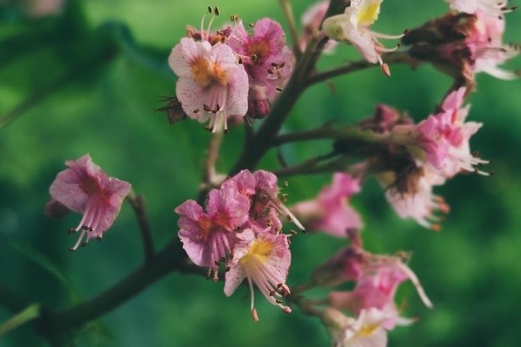 Spring story • - 1 _2016 - pinks - jadeedaj | ello