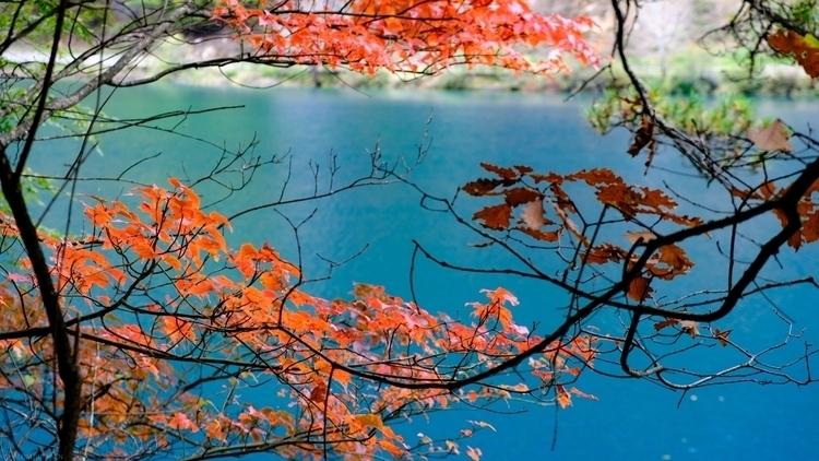 Colorful Fall Leaves vibrant aq - shutterstalk | ello