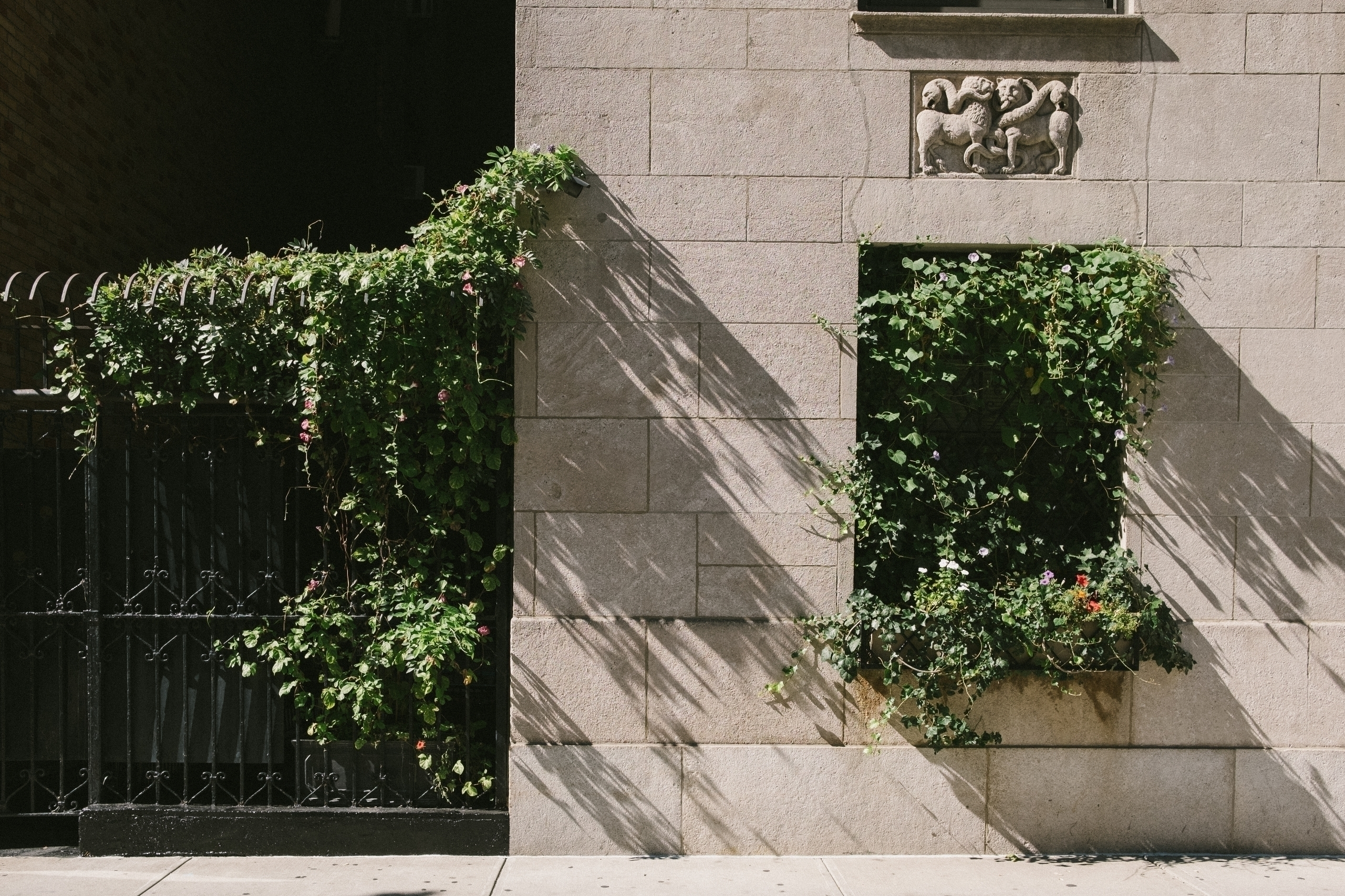 Grape Vines idea window - streetphotography - mikeyboards | ello