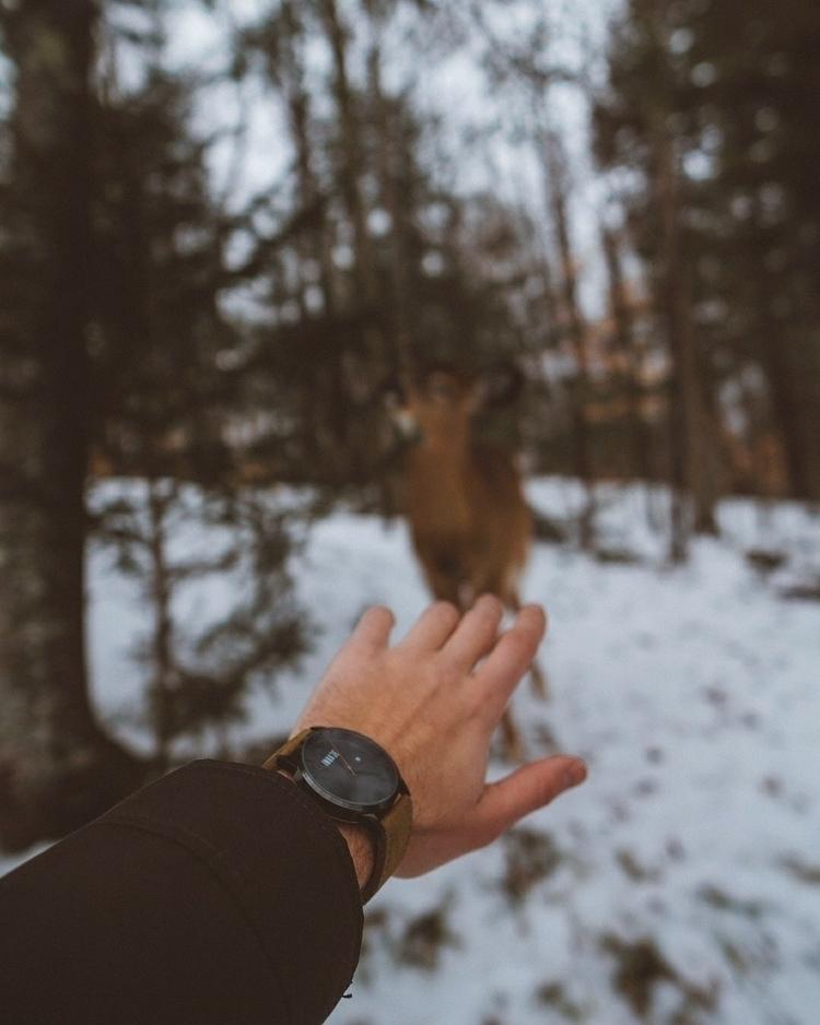 deer, forest, adventure, canada - marcantoine_vachon | ello
