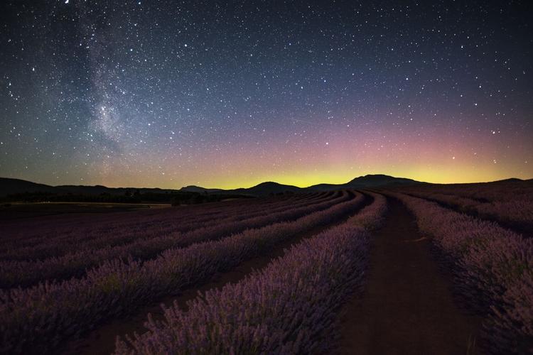 traveling, lavender, Tasmania - tingc | ello