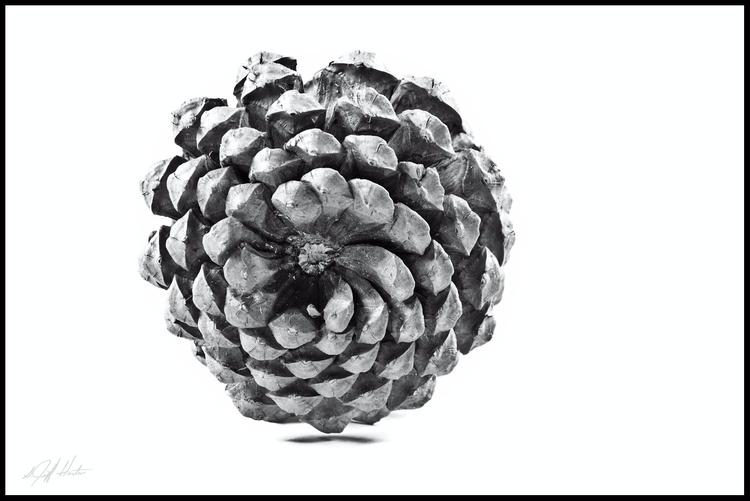 Pine Cone - blackandwhite, monchrome - kudzupatch | ello