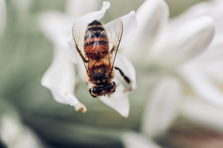 photography, macro, bee, nature - tend | ello