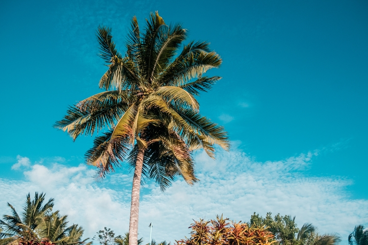Palm tree Corozal, Belize. sky - davy3photo | ello