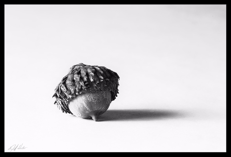 Portrait acorn - minimal, nuts, highkey - kudzupatch | ello