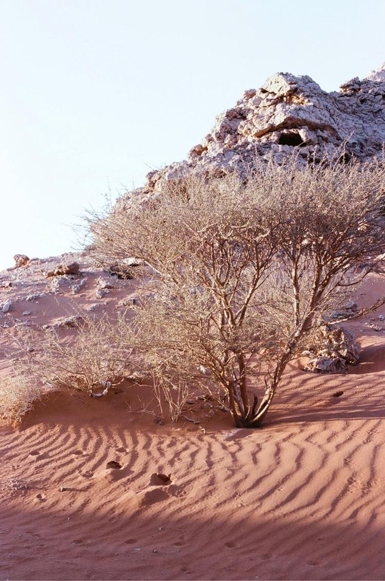 1000 years - Sharjah, desert, kodakportra400 - annashtraus | ello
