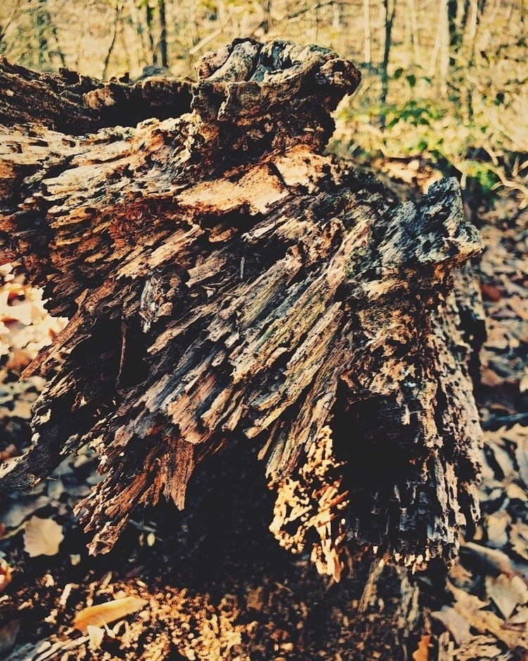 tree trunk - shotwithlight, lightsynth - stricker71 | ello
