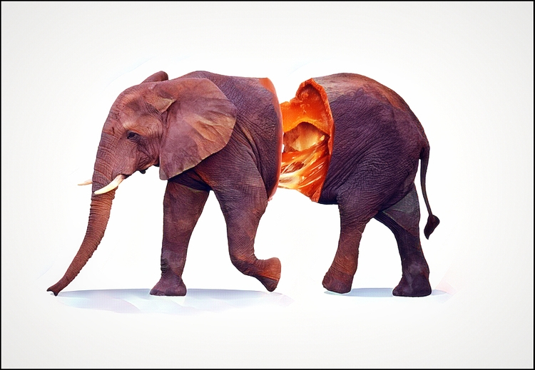 Chocolate Beast - chocolate, elephant - bordermind | ello
