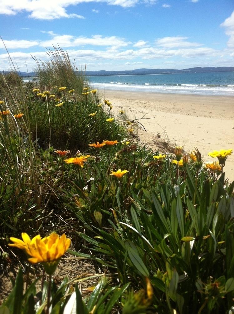 Tasmania 2018 - TS Callahan $ 2 - tscallahan | ello