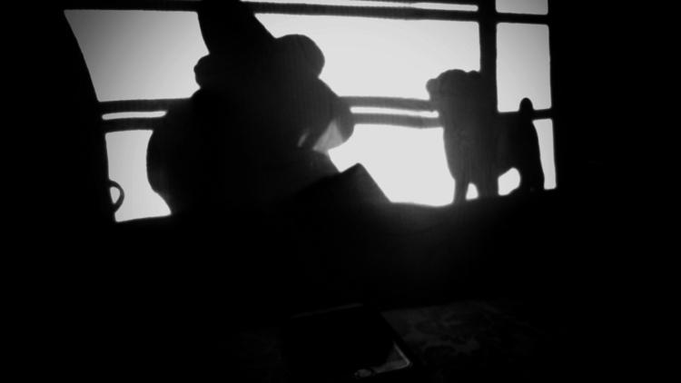 Dog, Window - perroloko | ello