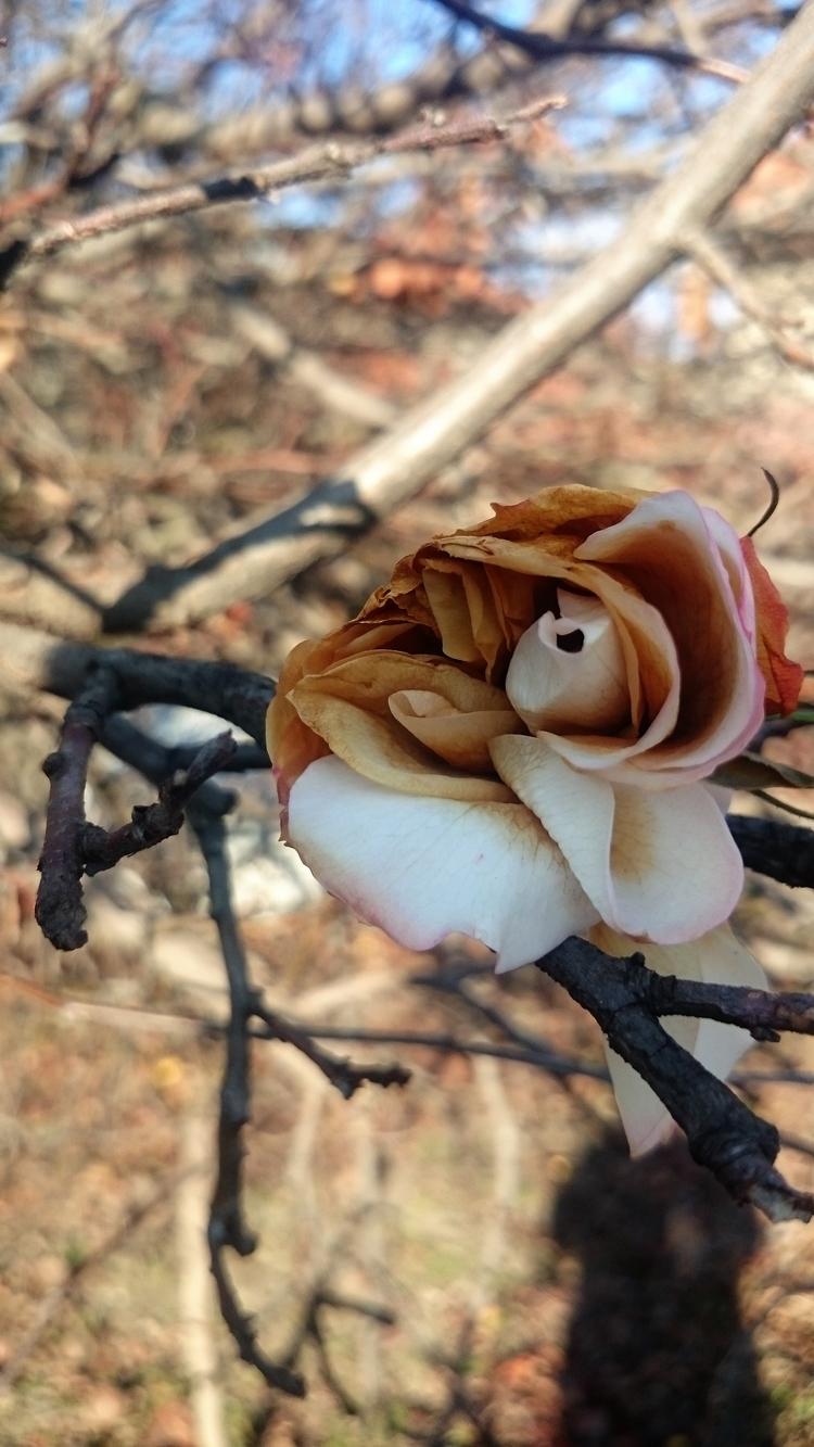 Winter flowers - serbia, photo, EarlyRain - earlyrain | ello