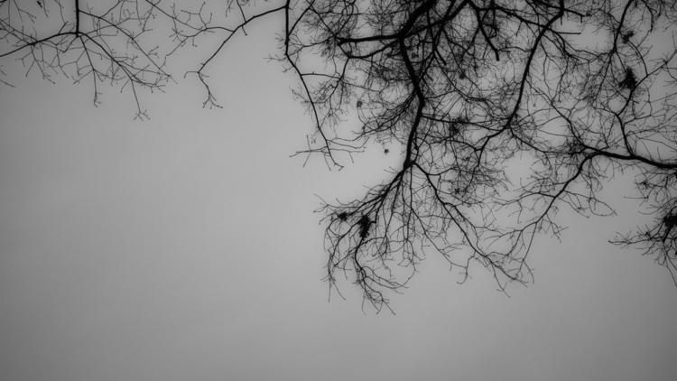 Bio: Eduardo Mueses Landscape F - photografia | ello
