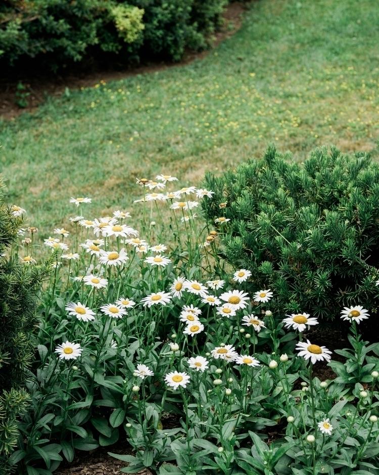 Missing spring - springfloral, springcolors - eddiepearson | ello
