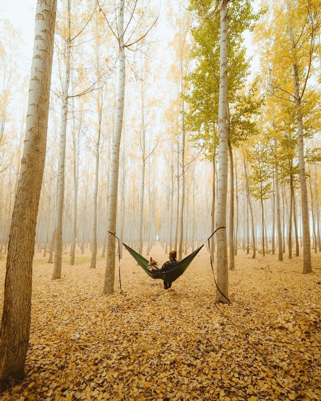 fall afternoon Banjo human - bayleyjunes | ello