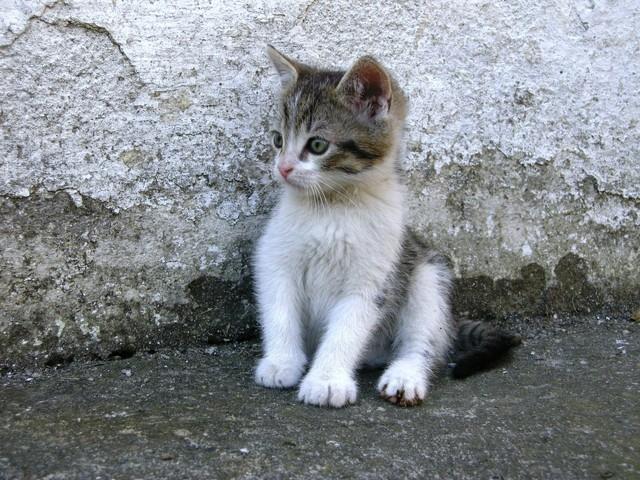 Cats.............#photo - EarlyRain - earlyrain | ello