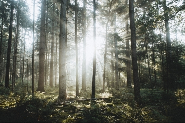 Light - nature, forest, outdoor - pablo_caballero_ | ello