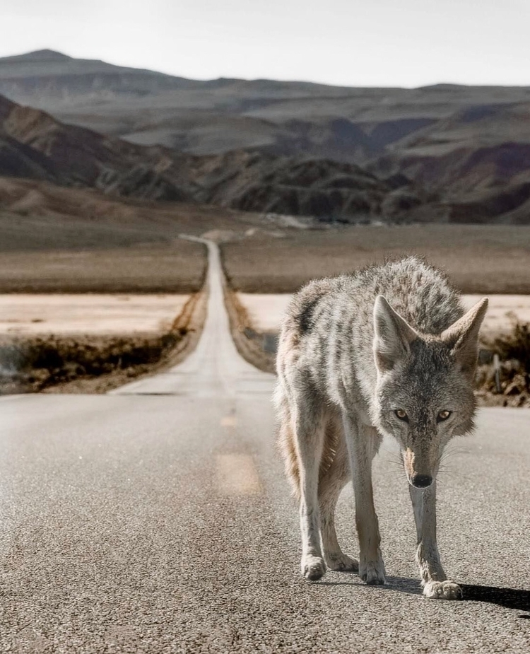 Crossing paths stranger  - scottvisual | ello