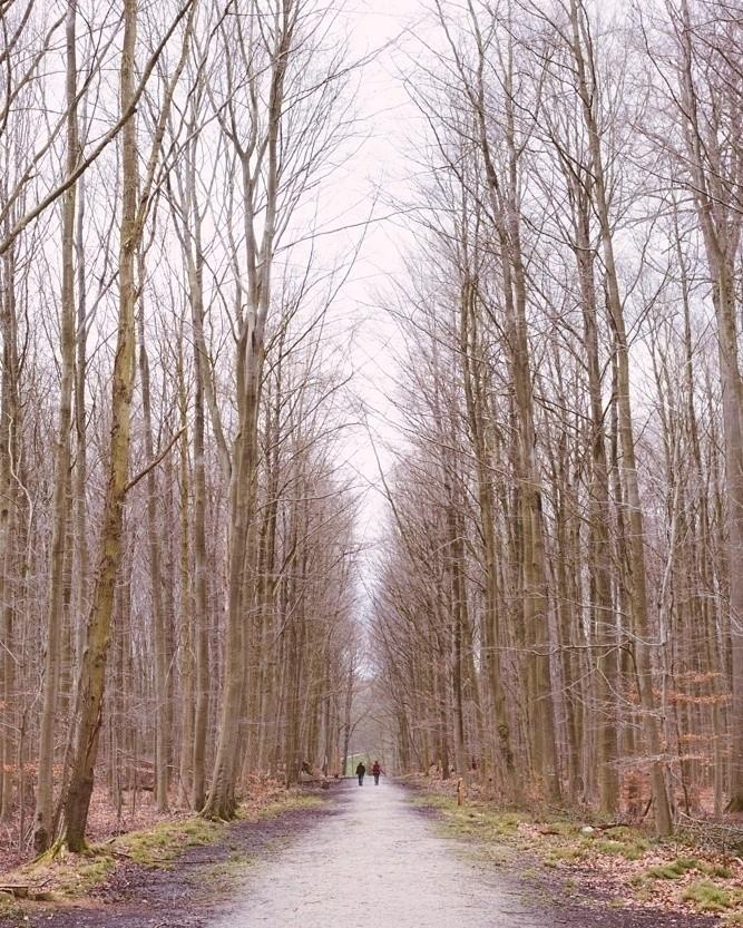 Winter - walkingmanwalks - antoamendola   ello