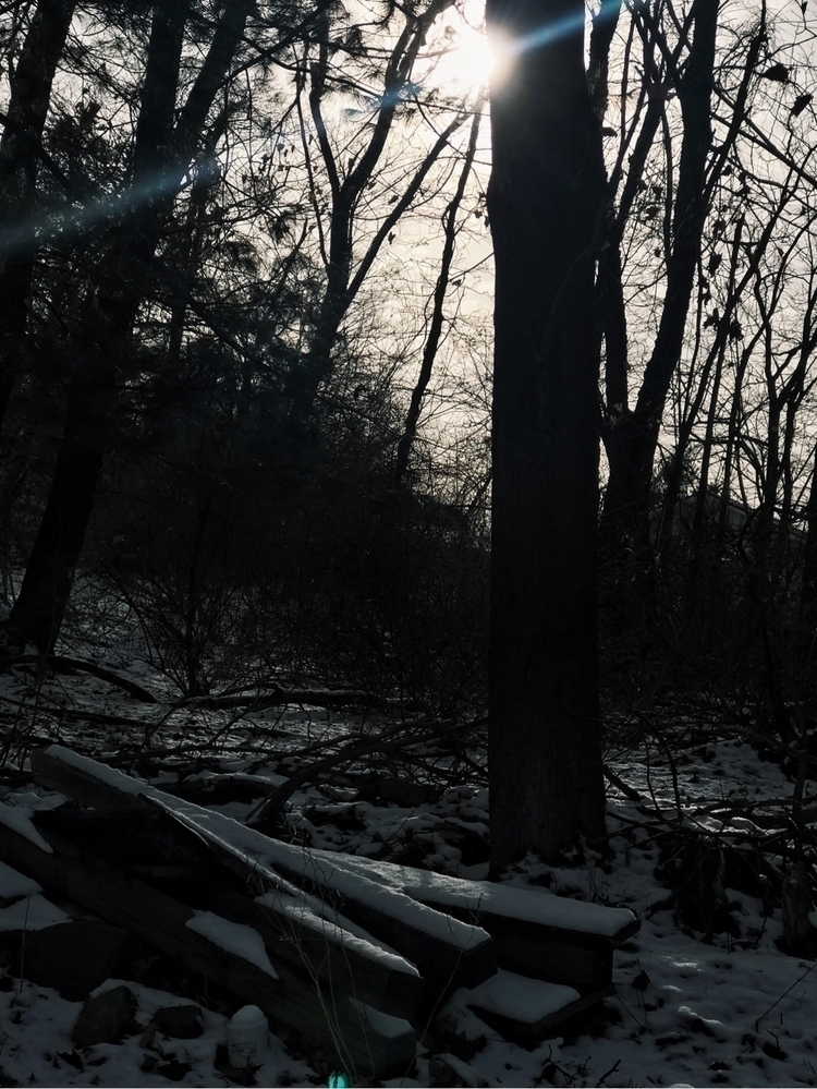 Dark Forest - vloggerslife, streetphotographer - itsngsr | ello