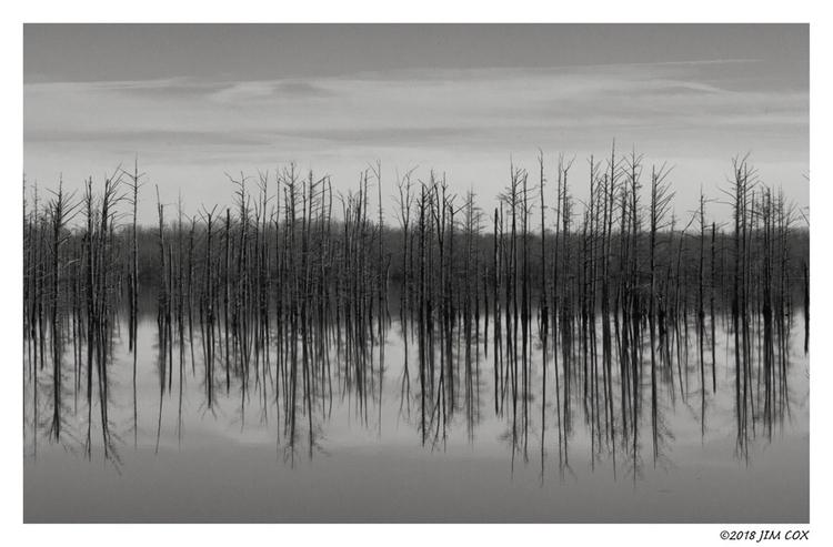 Hovey Lake: Cypress Trees - originalphotography - jascox | ello