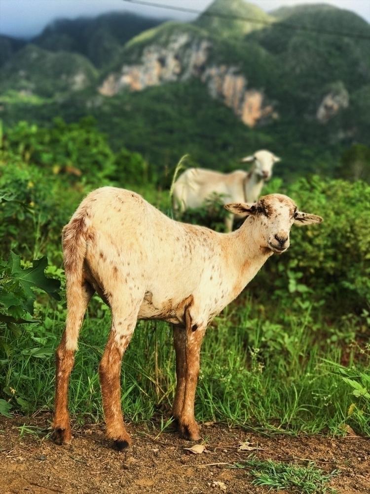 Miradas:sheep:  - Canonespaña, Sigma - annaroma | ello