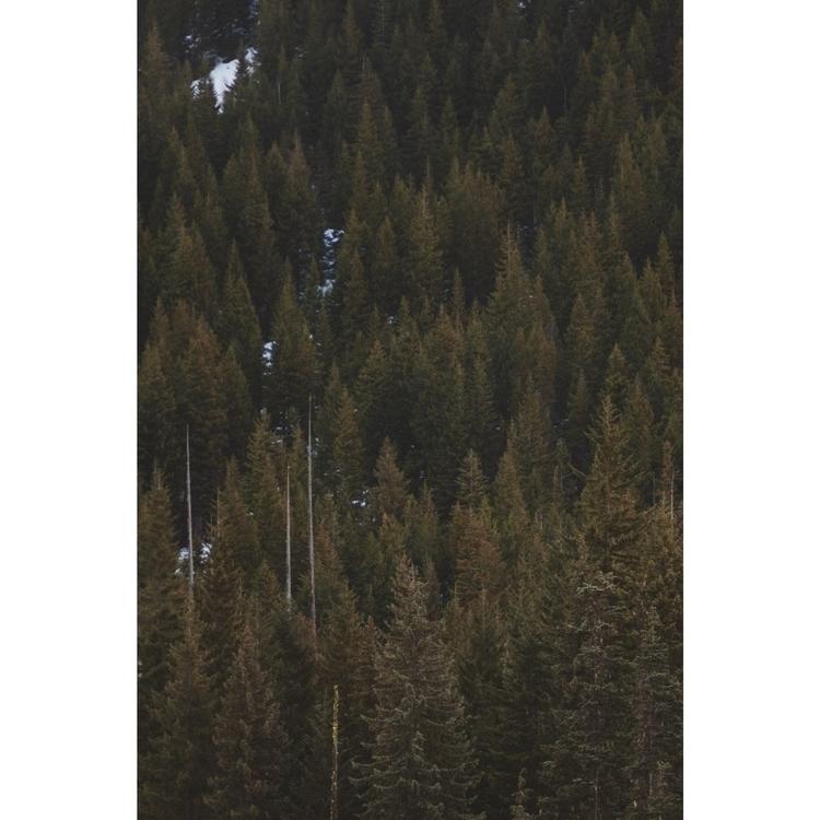 Trillium lake - ivankosovan   ello