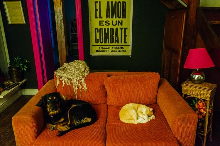 DE PERROS GATOS VII / DOGS CATS - lucasbernal | ello