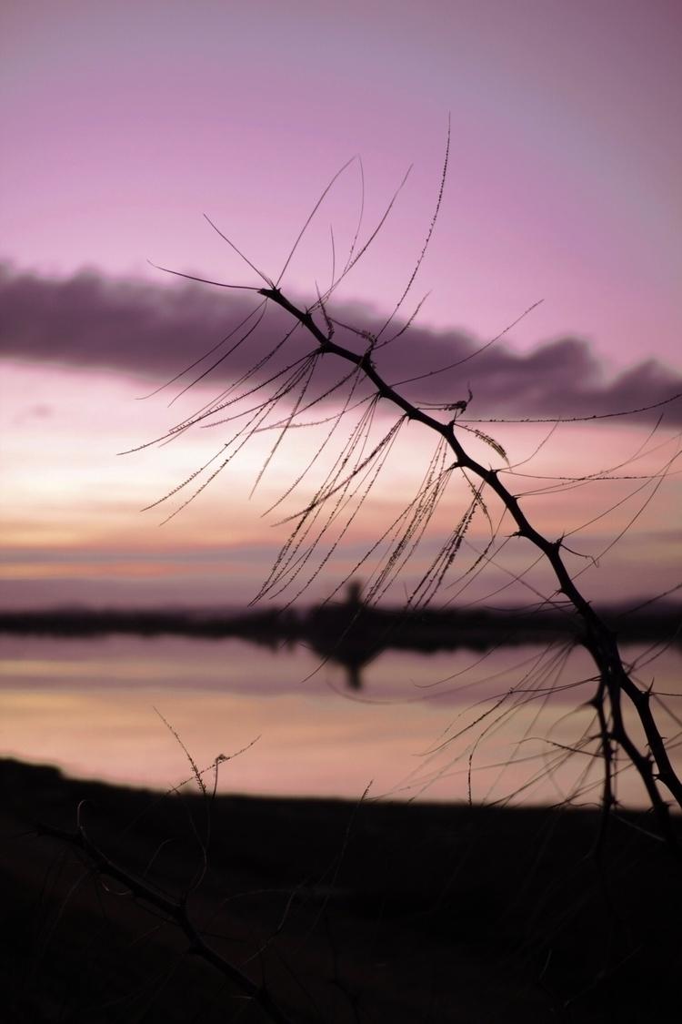 nightfall - elena__anpi | ello