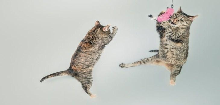 Amazing cats refusing share foo - genialthings | ello