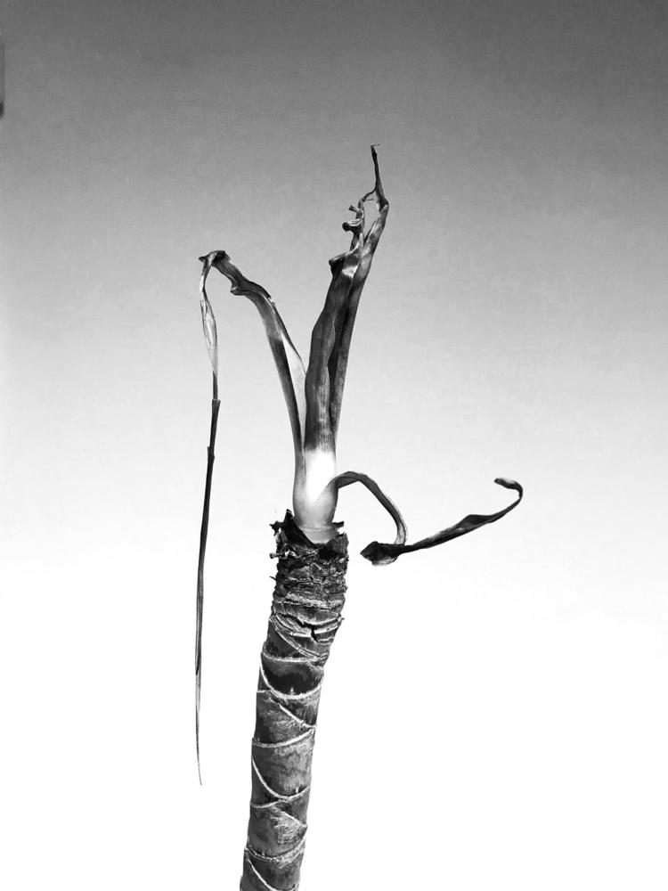 Plant - blackandwhitephotography - borisholtz | ello