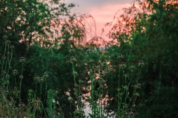 jungle - nature, green, colours - elena__anpi | ello