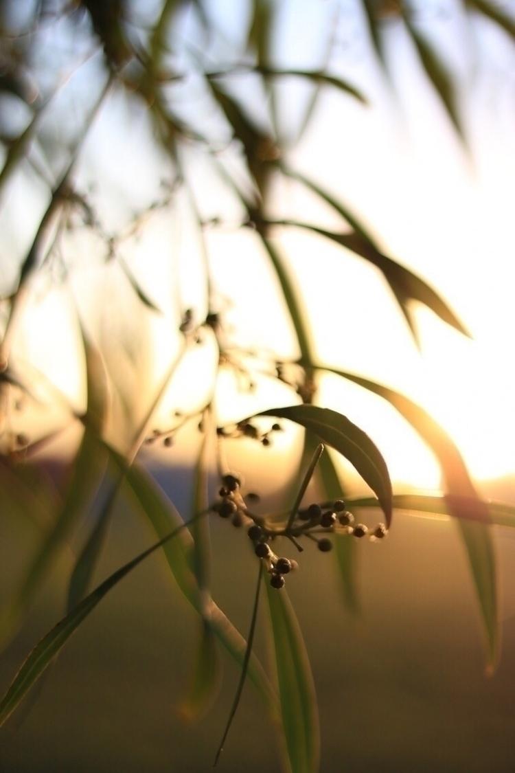 nature, goldenhour - solbarroso | ello