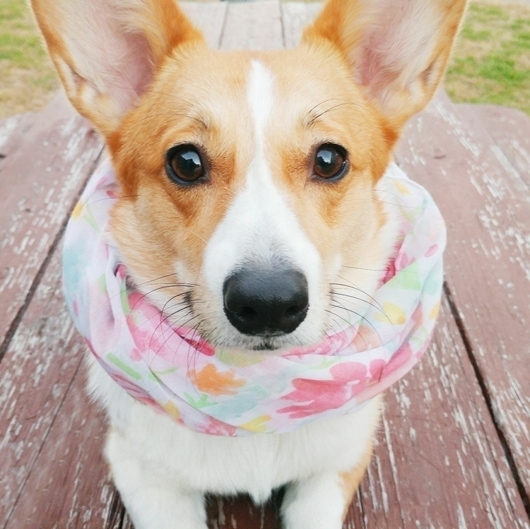 Gooooood morning, Ello - corgi, dogsofello - thesouthernbellepepper | ello