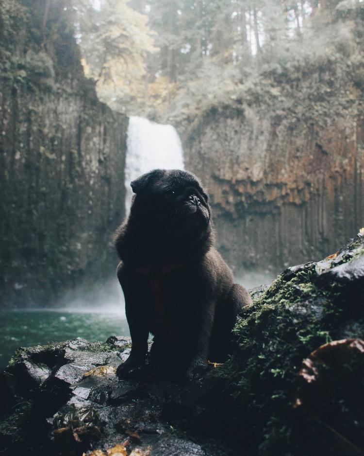 Hiking Pug - shatsky | ello