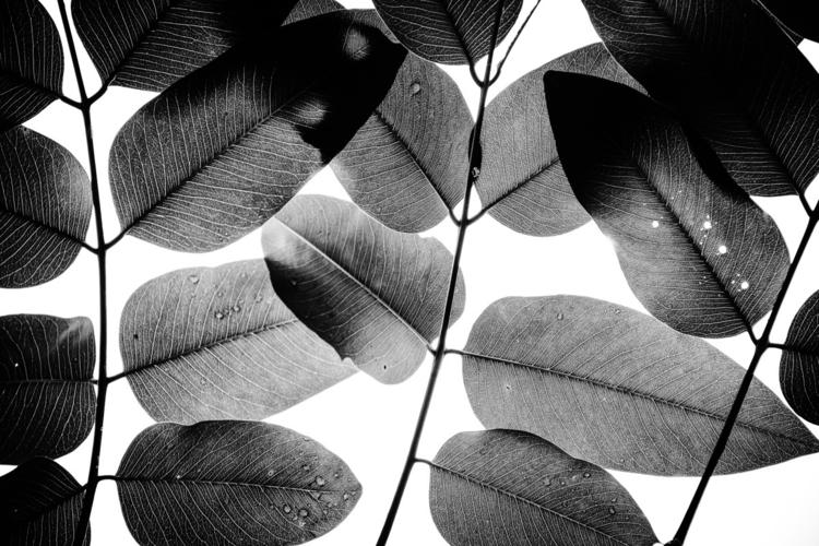 Experiments Leaves II images Li - talpazfridman | ello