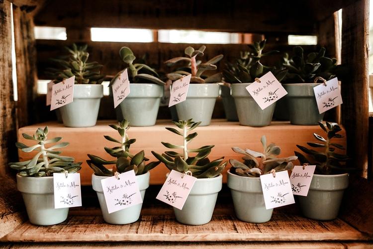 Plantitas cactus para todos tú - berezimoments | ello