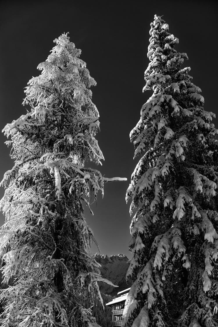 TWOTREE 2017 - photography, blackandwhite - pezzido | ello