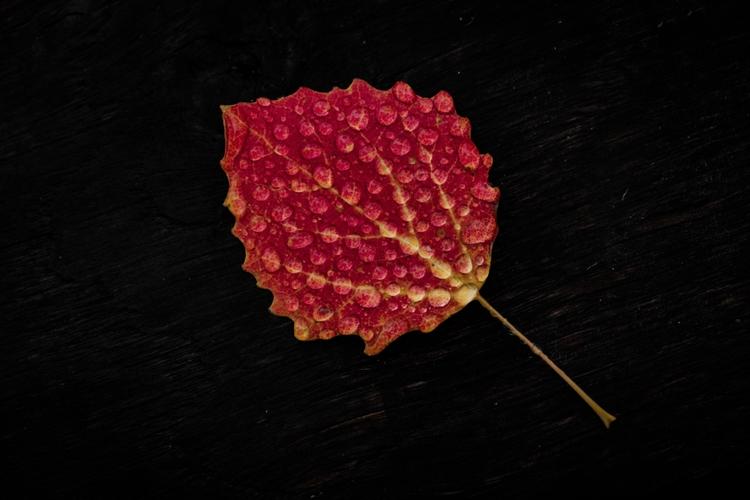 fujifilm, colour, leave, autumn - danielfazio | ello