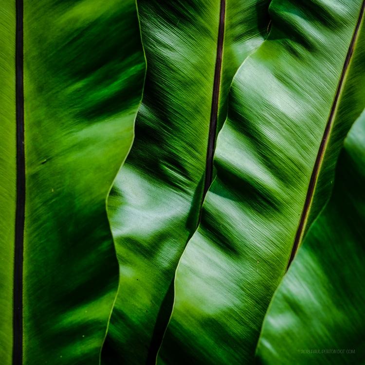 Tropical leaves, Botanic Garden - paulperton | ello
