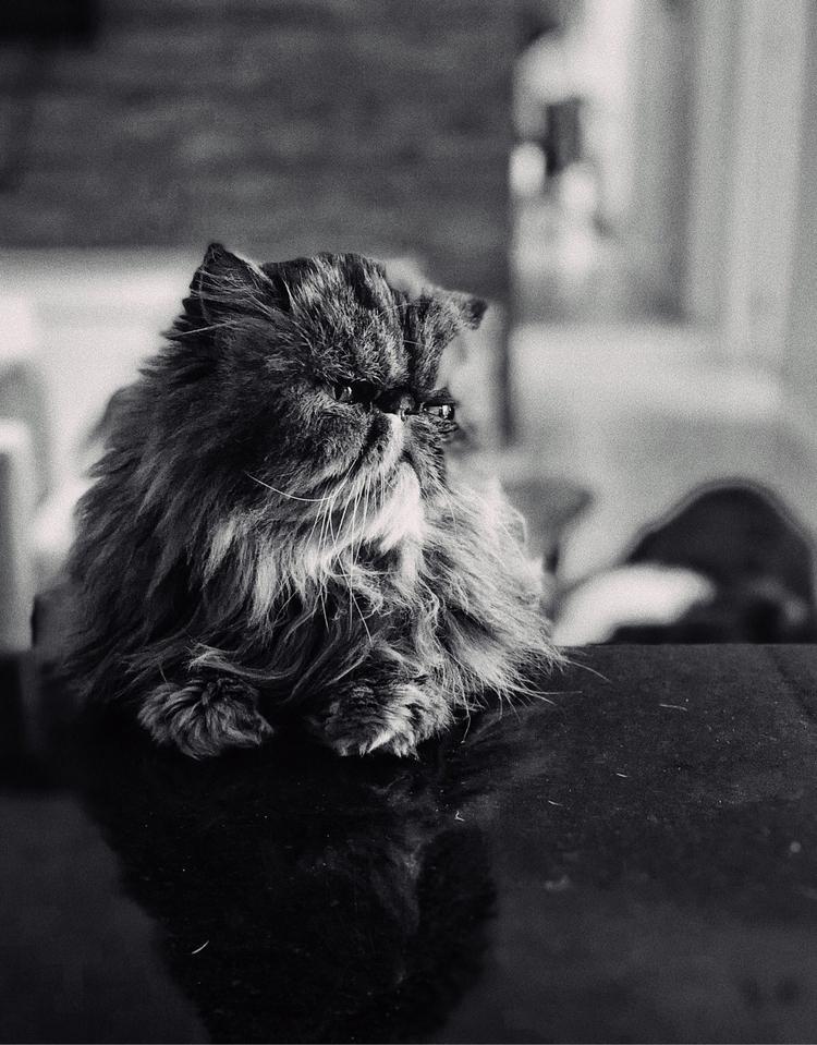 Greta waiting breakfast - petphotography - diogobarbieri | ello