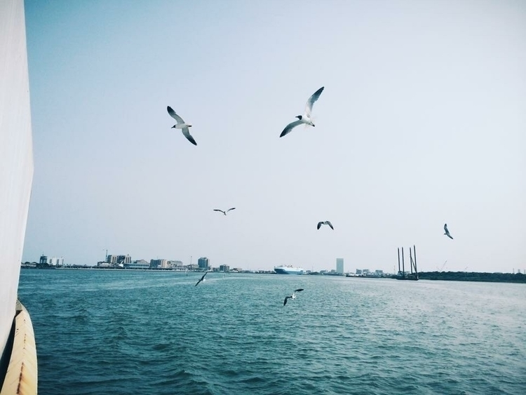 seagulls galveston - madisolo | ello